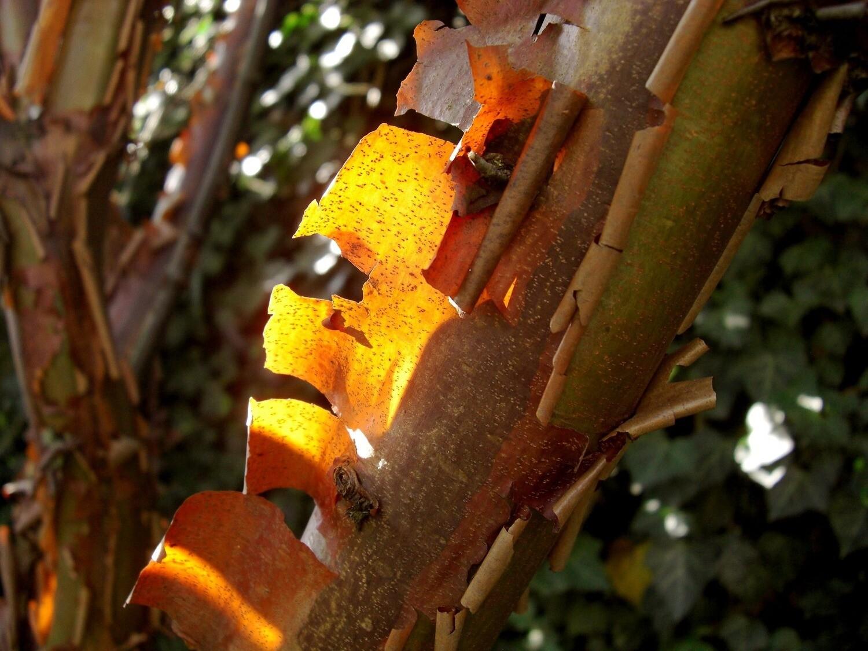 Cinnamon Bark Inspired DIY Kit