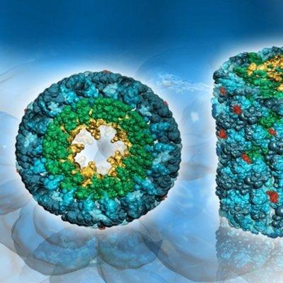 Alpha-1-Microglobulin, Affinity Purified (Sheep) AG 2328
