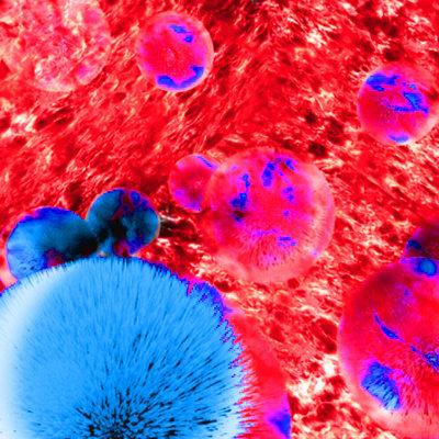 Sex Hormone Binding Globulin (SHBG) MAb BO 1221