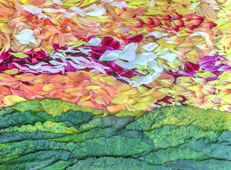 Petal Pointillism # 9 (Premium Edition)