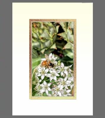 Honey Bee on Garlic Chive  5