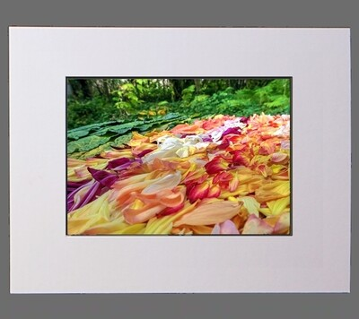 Petal Pointillism #9 (Sideways)  8