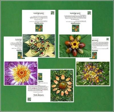 Celestial Vegetable Greeting Cards Set # 3