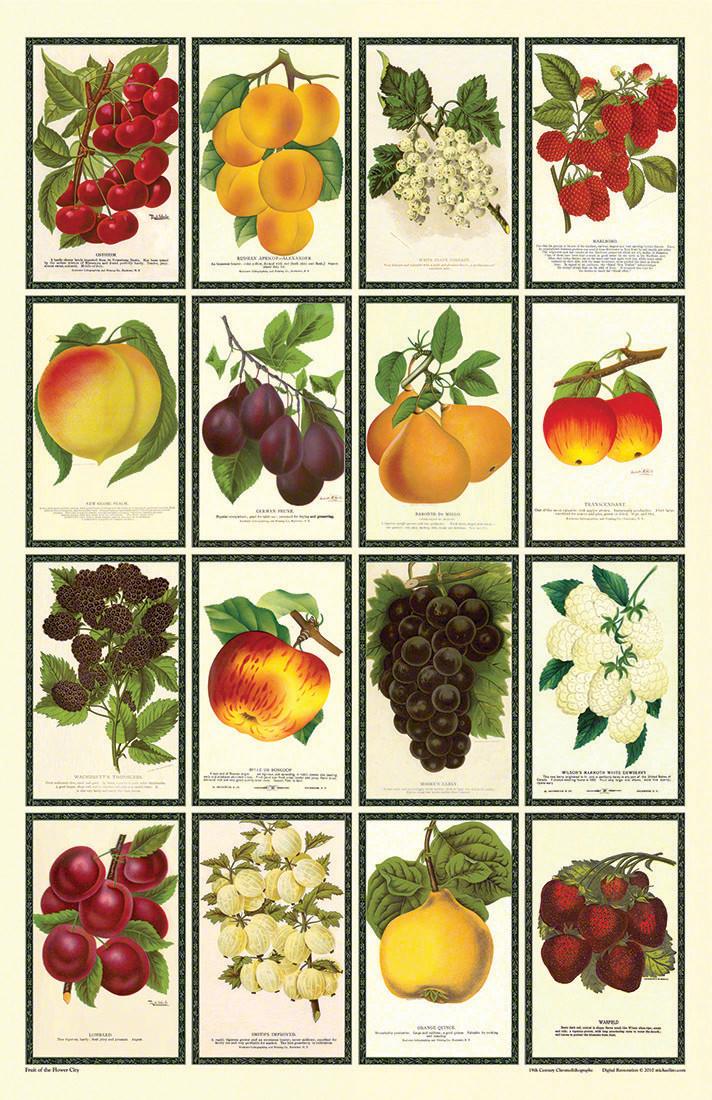 Fruit of the Flower City