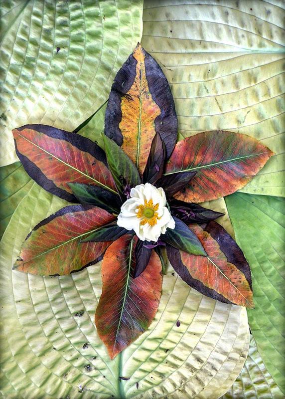 Autumn Pear Leaf Star