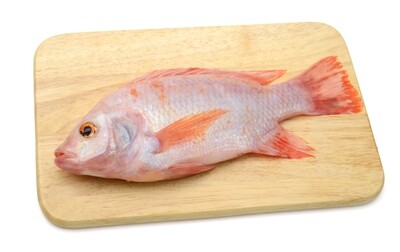 Pan Royal Frozen Red Tilapia