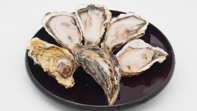 Pan Royal Frozen Japan Murotsu Whole Shell Oyster (Sashimi Grade)