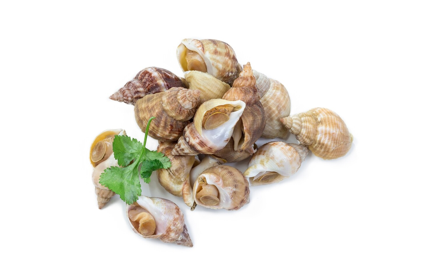 Pan Royal Ireland whelk