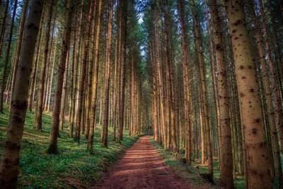 Roter Waldweg