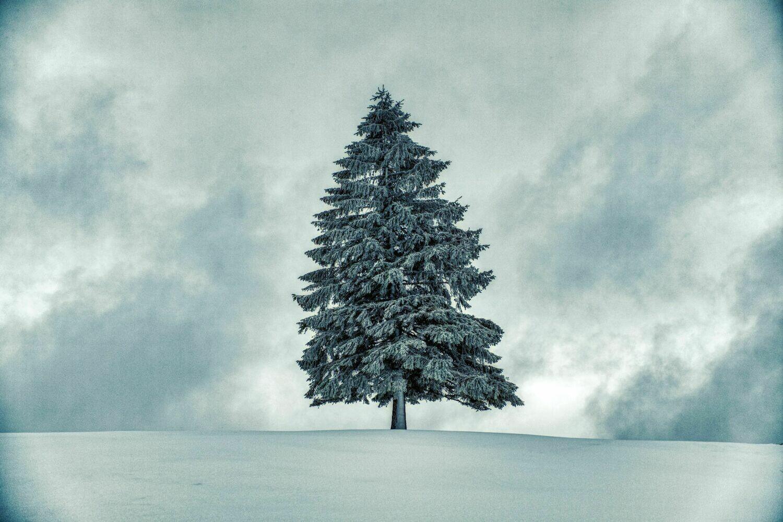 Stolze Pracht im Schneegestöber