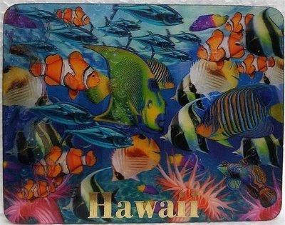 Magnet - Coral Fish I 3D