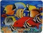 Magnet - Coral Fish II 3D