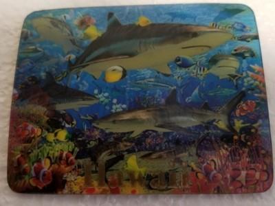 Magnet Shark Reef 3D