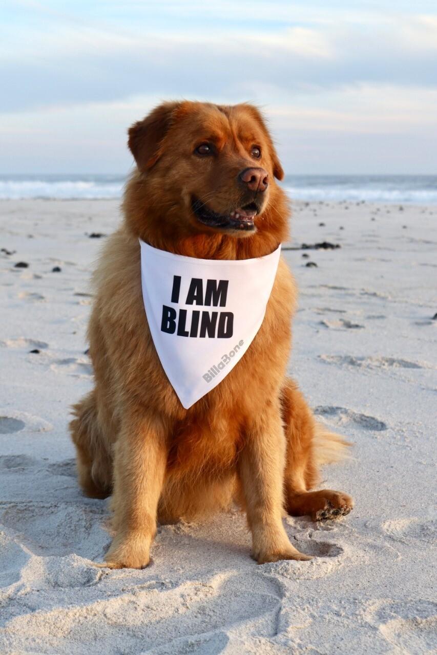 Billabone - I am blind Bandana