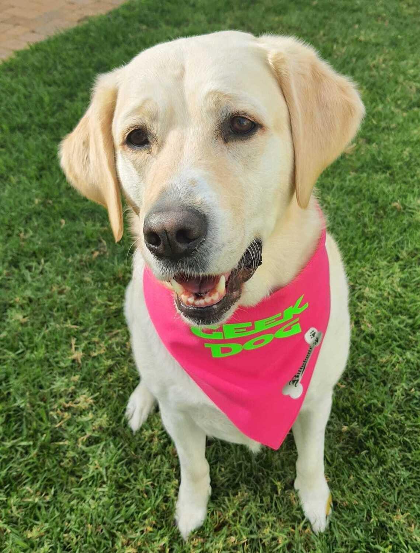 Billabone - Geek Dog Pink Bandana