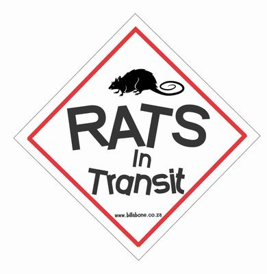 Rats in transit Car Sign or Sticker
