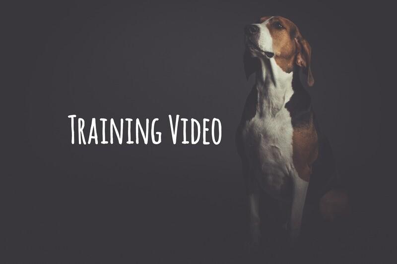 1 ON 1 VIDEO DOG TRAINING SOLUTION