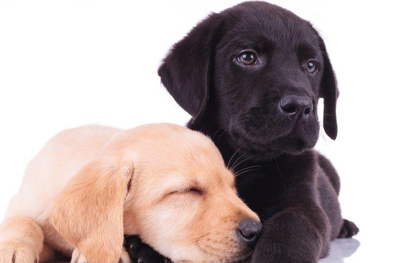 Puppy Headstart Program