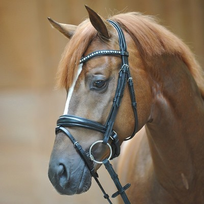 "Bridle ""Mia"" with crank noseband"