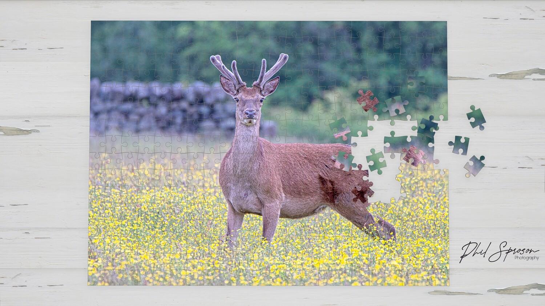 Red Deer 1000 Piece Jigsaw