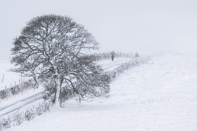 A Winter Walk Print Options (January from the Calendar)