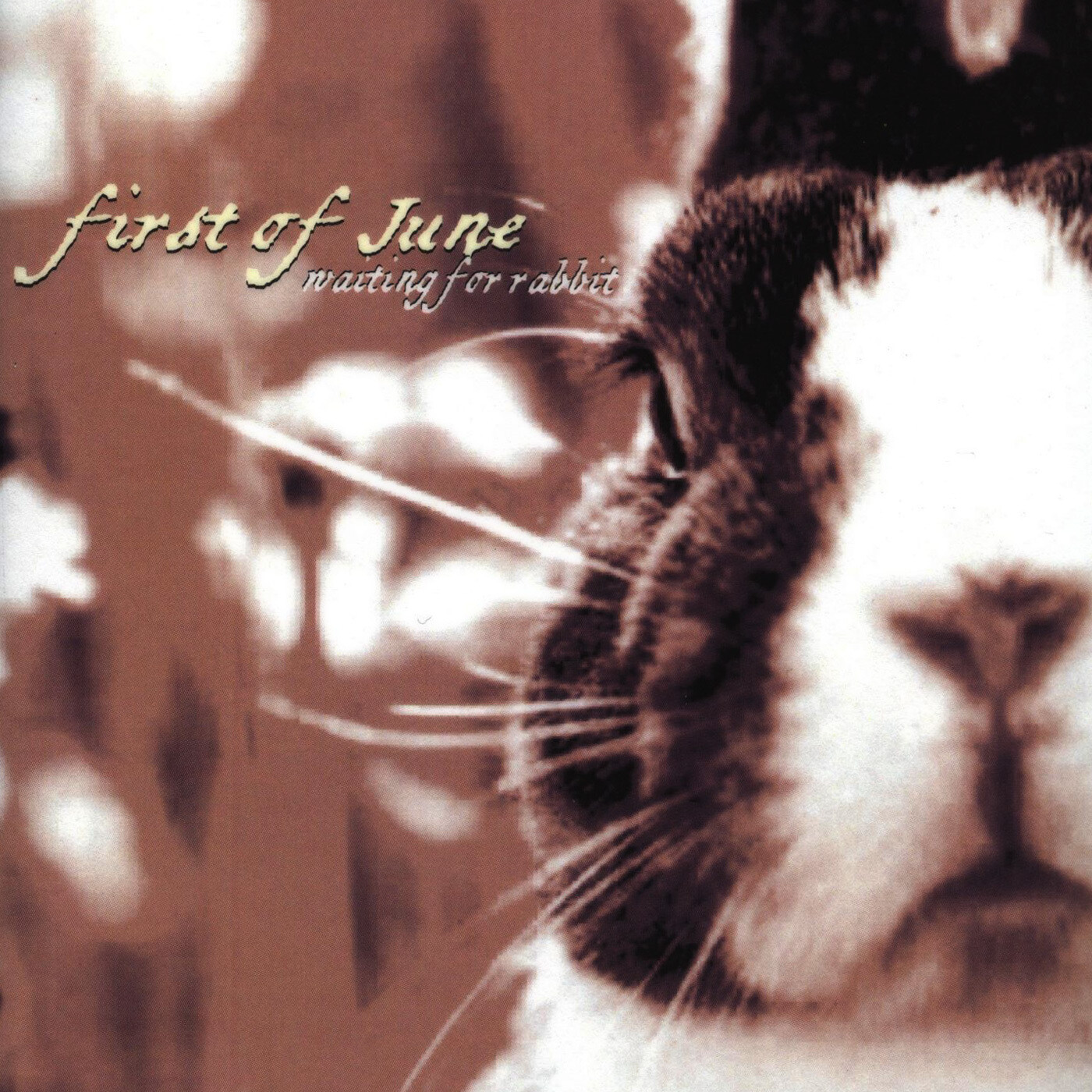First of June - Waiting For Rabbit (MP3 format)