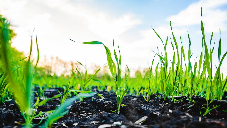 Plant Leaf Tissue Macro & Micro Nutrients (PUD1W)