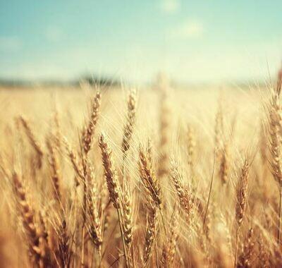 Grain Macro & Micro Nutrients