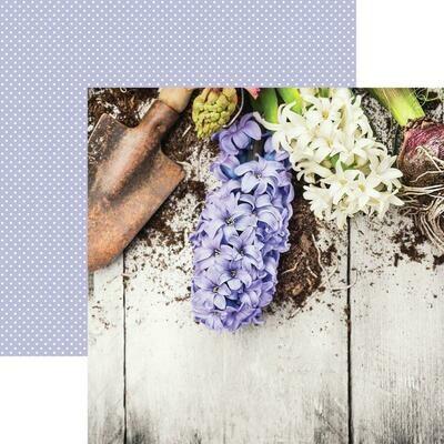 Lilac Hyacinth