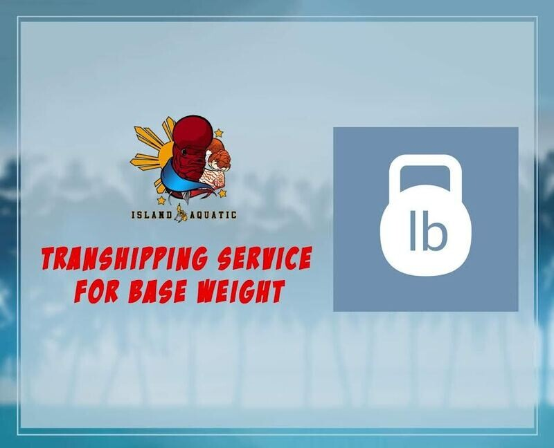 TRANSHIPPING SERVICE FOR BASE WEIGHT