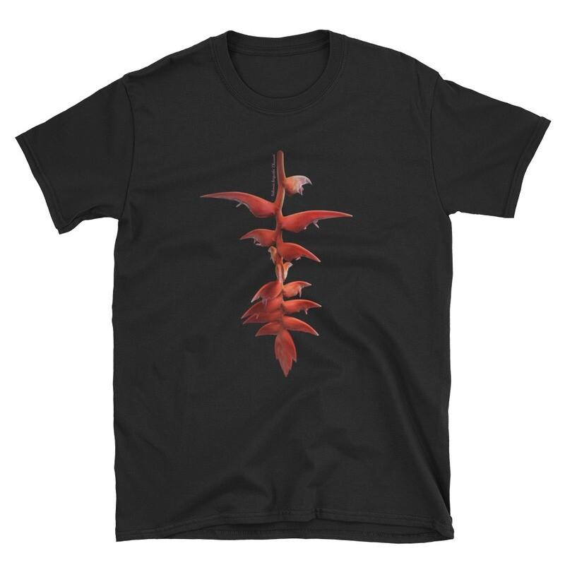 Heliconia berguidoi 'Chucanti'