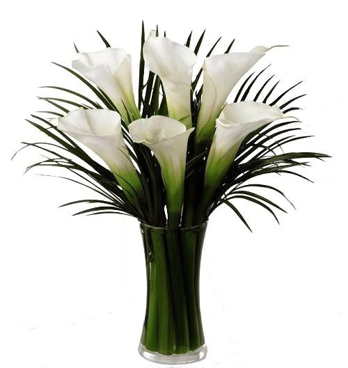 White Calla in Vase