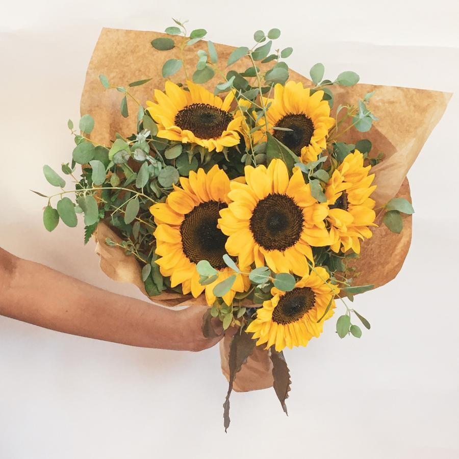 50 Sunflower Lebanon