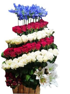 Rose in row Lebanon