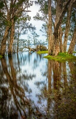 OVERFLOW - MYALL LAKES NATIONAL PARK - A4 PRINT