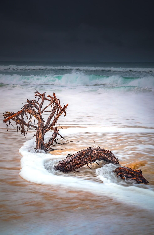 WATER DRAGON - BENNETT'S BEACH - A4 PRINT