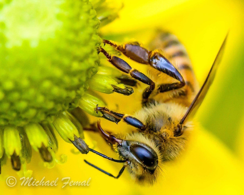 Print - Beeing Yellow
