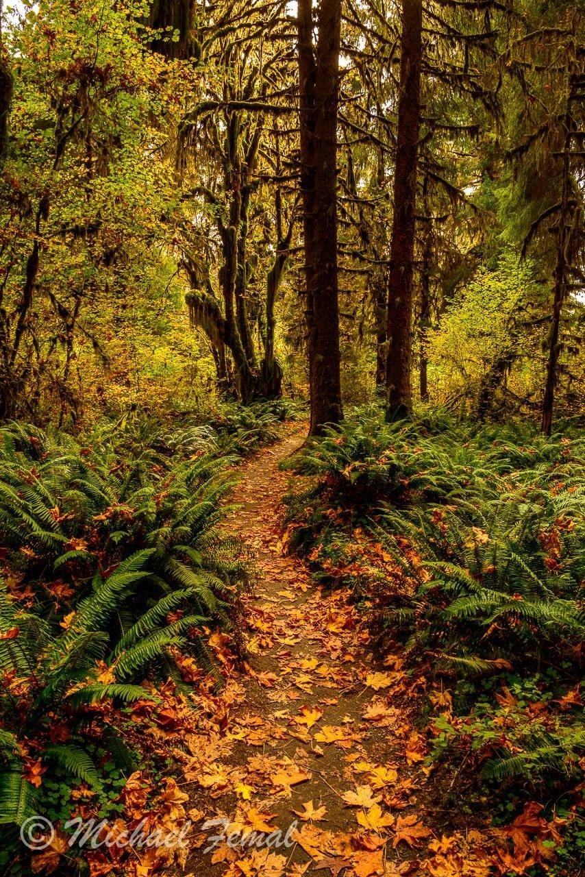 Print - Rainforest Walk