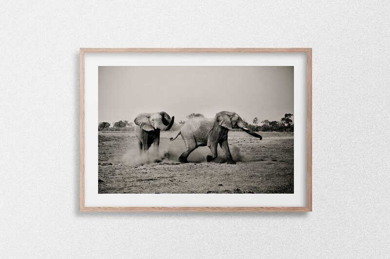 Juvenile Elephants Playing With The Dust