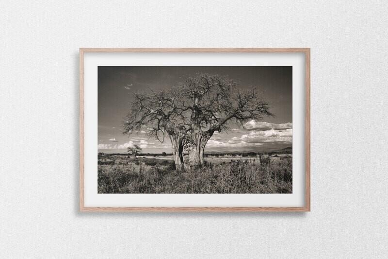 The Magical Baobab Tree of Tanzania