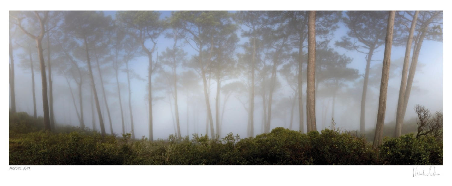 Majestic Forest - Signal Hill | Martin Osner