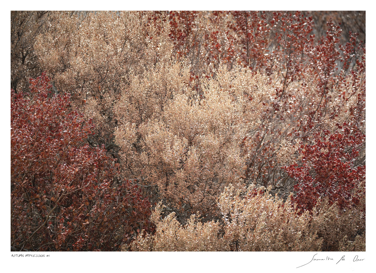 Autumn Impression No.1 | Samantha Lee Osner