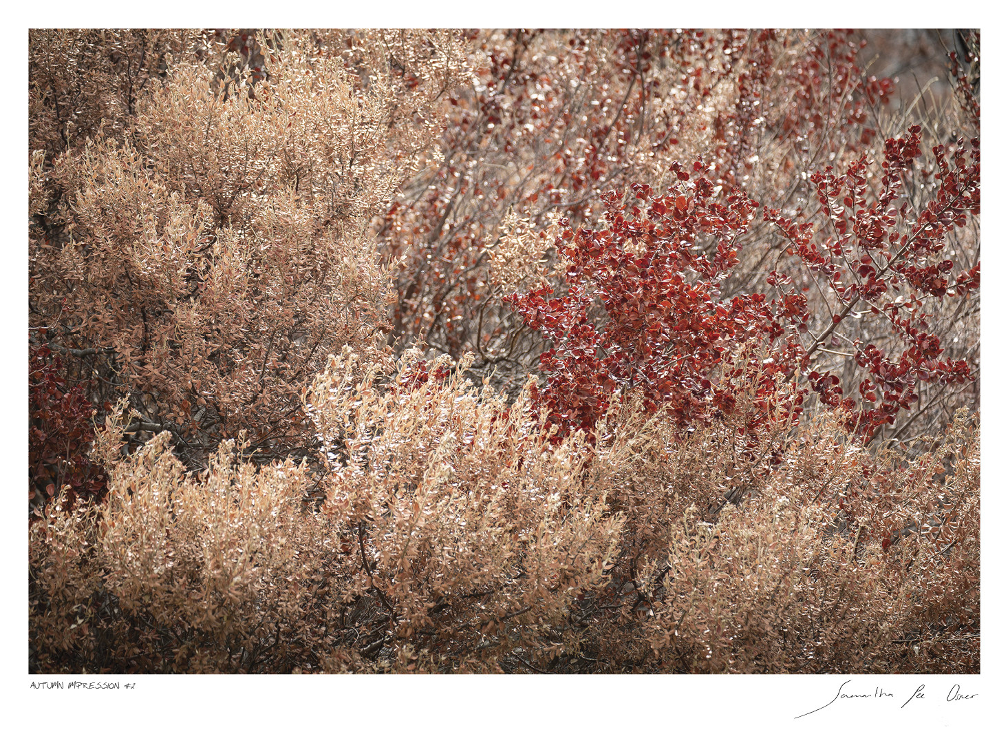 Autumn Impression No.2 | Samantha Lee Osner