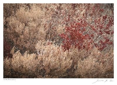 Autumn Impression No.2 | Samantha Lee Osner