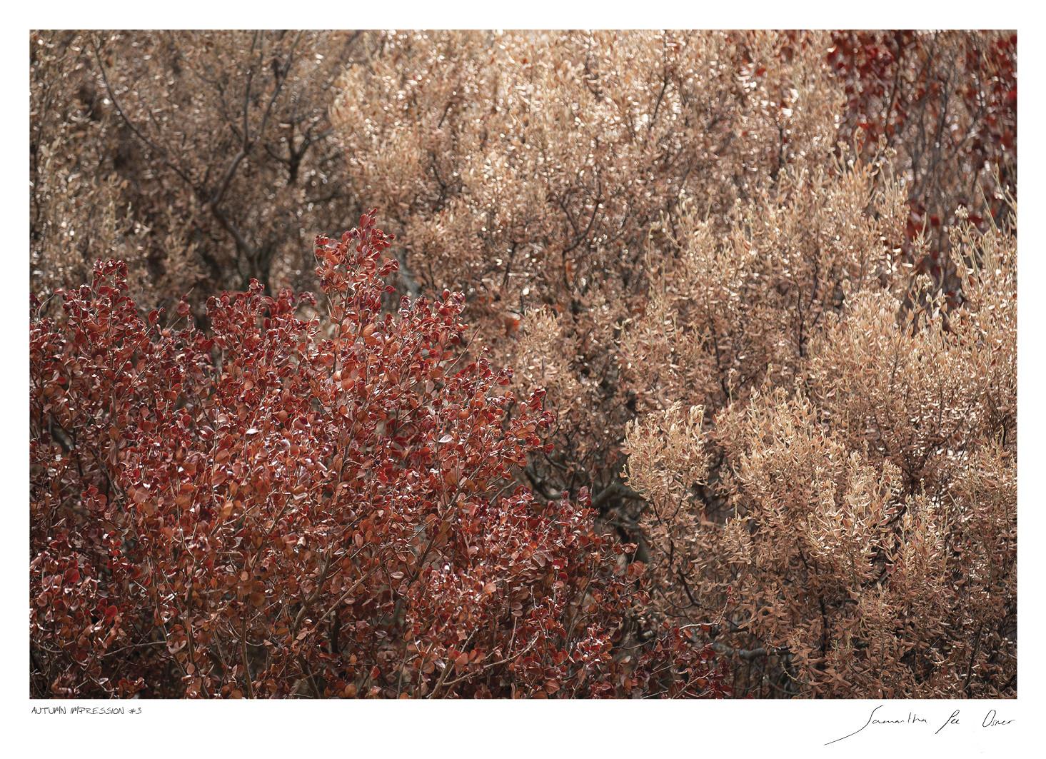 Autumn Impression No.3 | Samantha Lee Osner