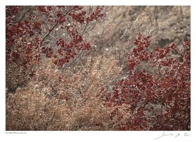 Autumn Impression No.4 | Samantha Lee Osner