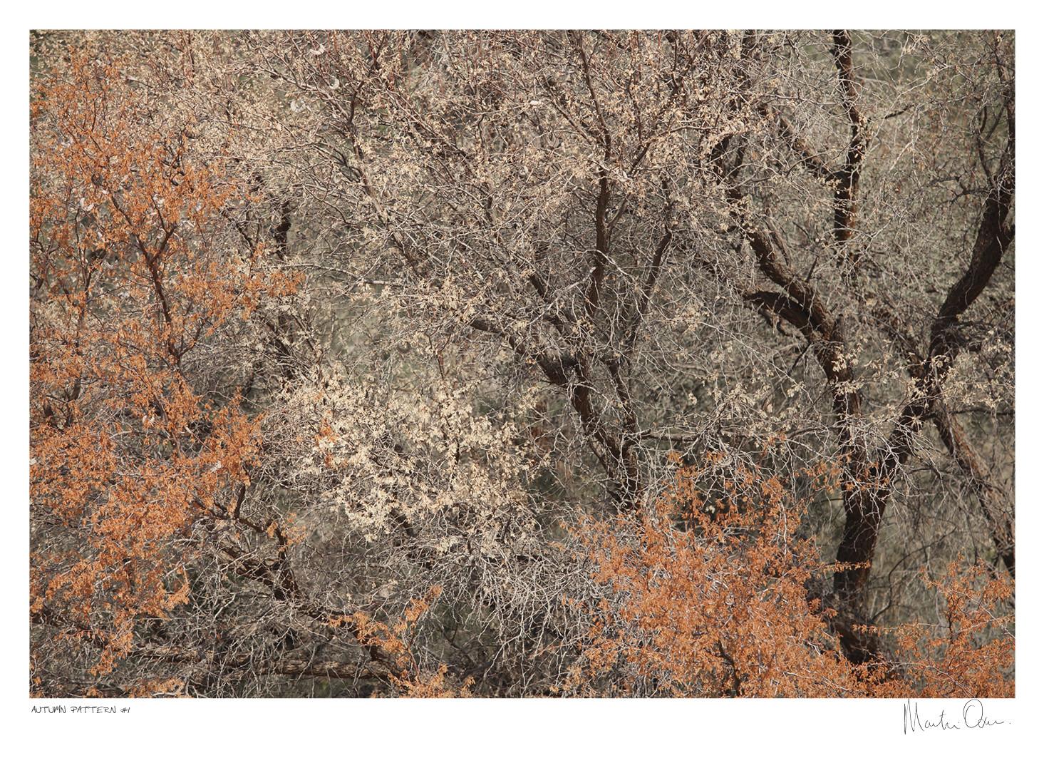 Autumn Pattern No.1 | Martin Osner