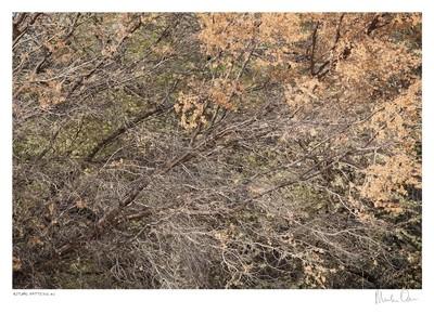 Autumn Pattern No.2 | Martin Osner