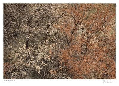 Autumn Pattern No.3 | Martin Osner