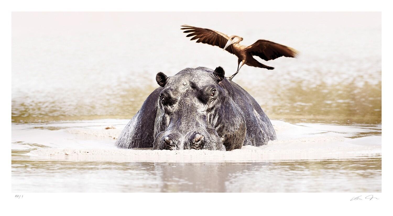 Okavango Harmony   Ltd Ed   Klaus Tiedge